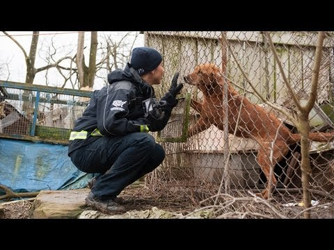 100+ Animals Rescued from Neglect