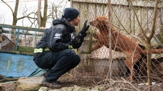 100 animals rescued from neglect