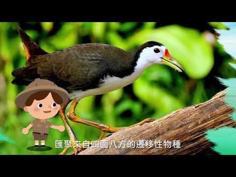 臺灣國家公園采風系列-東沙環礁國家公園平鑄套幣