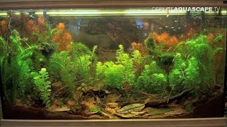 Biotope Aquarium Design Contest 2015 - the 5th place, Eurasia