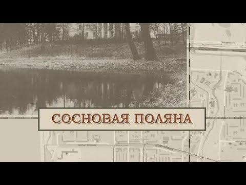 Малые родины большого Петербурга. Сосновая поляна