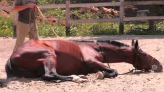 Все О Домашних Животных: Лошадиная Семья