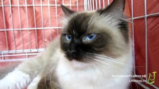ИнфоКот-2014: живая энциклопедия кошек