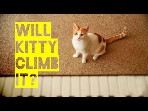 Will Kitty Climb It? - A Film by Friskies