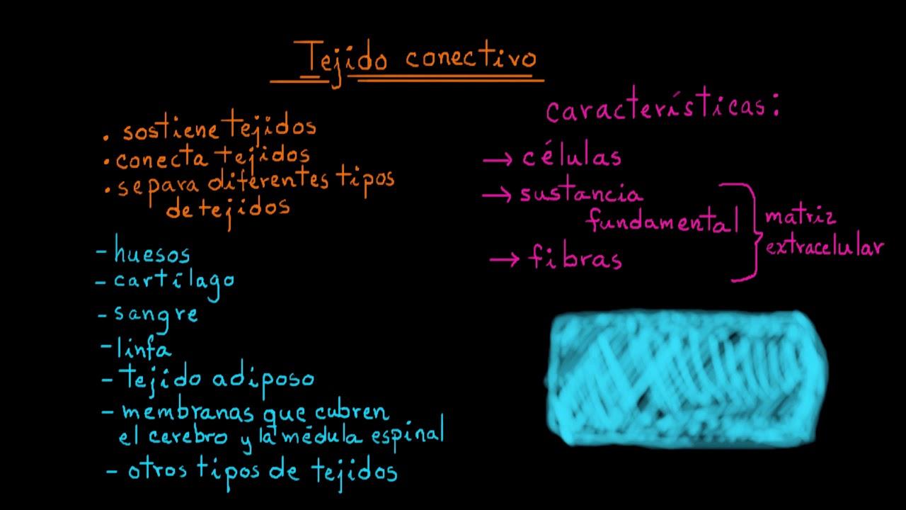 diferentes tipos de tejidos conectivos