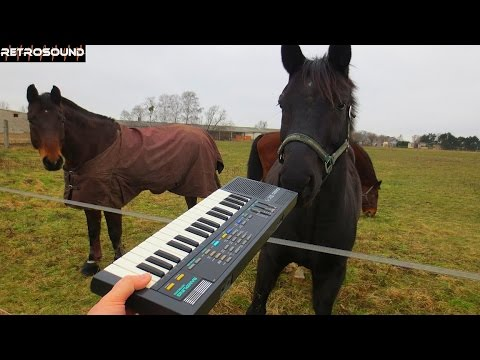 CASIO SK-1 - sampling works with Mister ED and friends