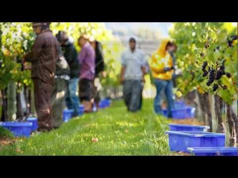 wine article Reduce Reuse Recycle  Sustainable New Zealand Wine