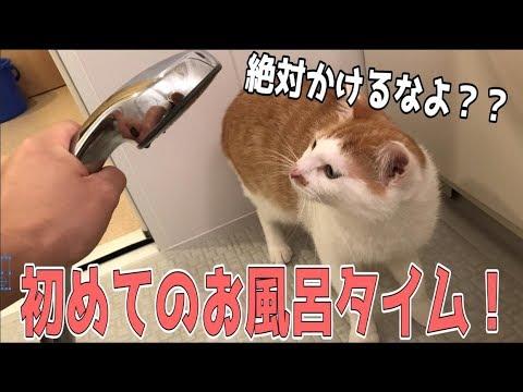 新しいお風呂に飼い主と一緒に入る猫たち!お湯をかけたら文句言われちゃった…