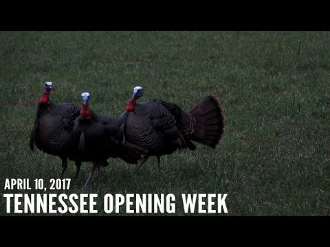 Tennessee Turkey Hunting - Missouri Youth Turkey Season   Spring Thunder