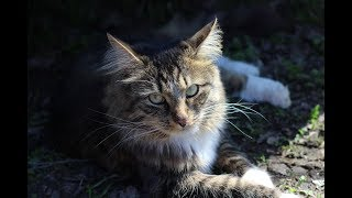 Кот и бабочки. Деревенские забавы городского кота.