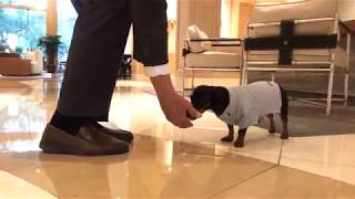 Crusoe Explores His 5-Diamond/5-Star Hotel in Phoenix