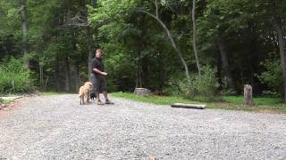 Board And Kennel Training | Winston Salem | Buddy