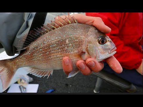 Derwent River Snapper    Fishing Derwent River Tasmania    First Snapper Ever!