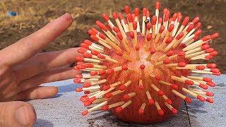 リンゴにマッチ刺して焼きリンゴ作るよ!! 【実験】 PDS