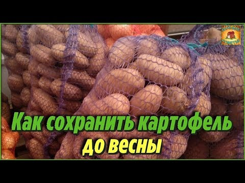 Вопрос: Как замедлить прорастание картофеля в погребе и как это сделать?