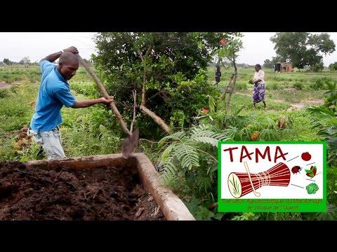 TAMA: Transition Agro-écologique du Maraîchage en Afrique de l'Ouest