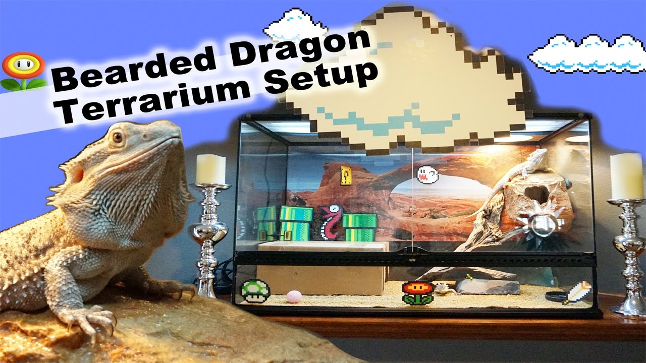 Picture Of The Proper Way To Set Up A Bearded Dragon Enclosure