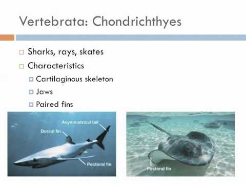 Biology 2, Lecture 12: Deuterostomes