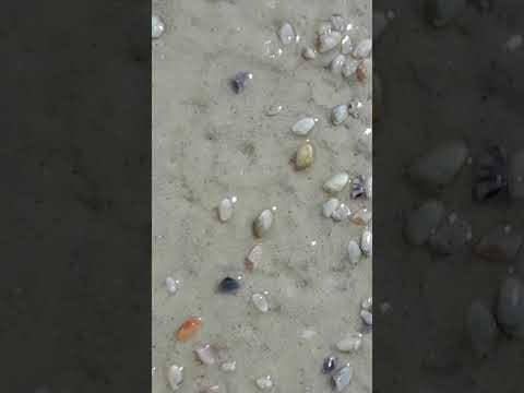 Living Sea Shells