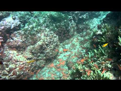 Costa Rica Underwater