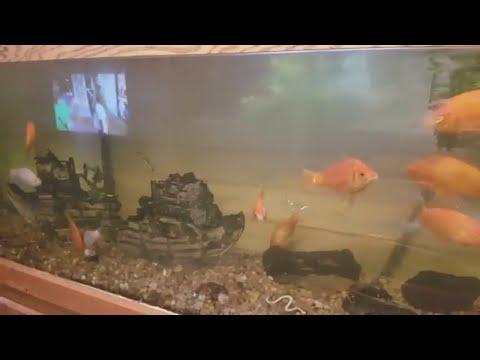 How To - Cleaning Calcium From My Fish Aquarium (fish Tank)