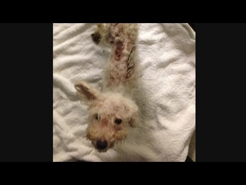 Emaciated dog dumped at shelter in Pennsylvania
