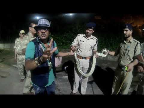 Indian Rock Python non venomous Rescue in Panchet Power Station  Dhanbad