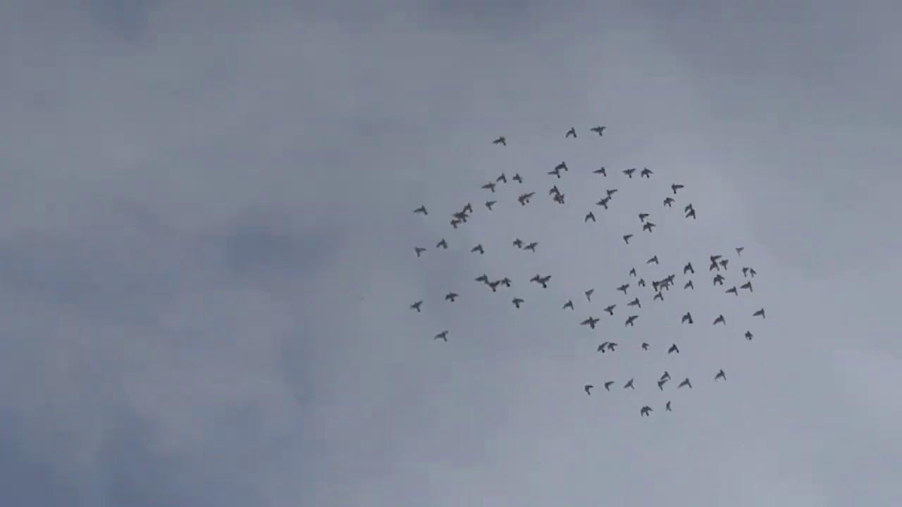 زقيت طيوري وشلون راح احافظ عليهن