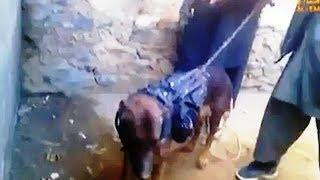 Taliban To US...We Have Your Dog, Special Forces SNIFFER DOG Became Prisoner Of Taliban!!