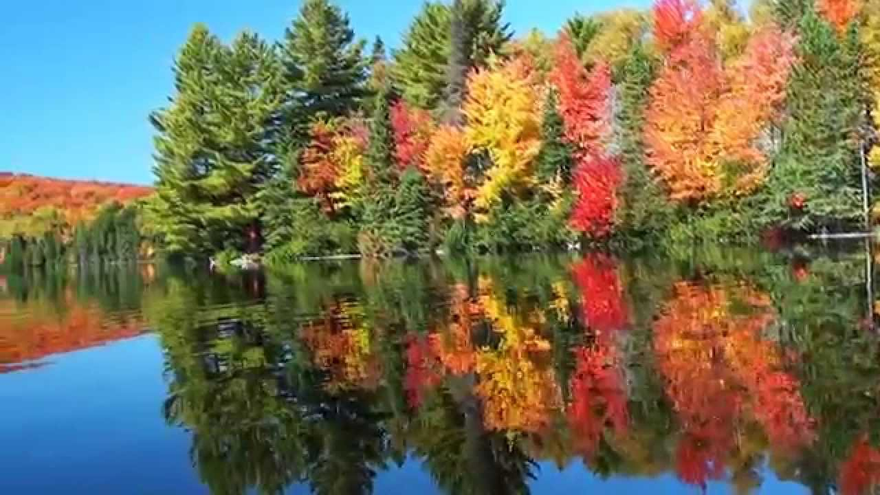 Free Fall Foliage Wallpaper Fall In Algonquin Provincial Park Youtube