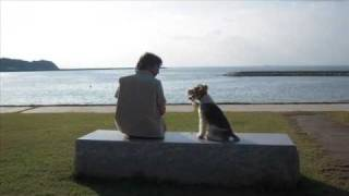 Wire Fox Terrier nana and me at the beach ワイヤーフォックステリア ...