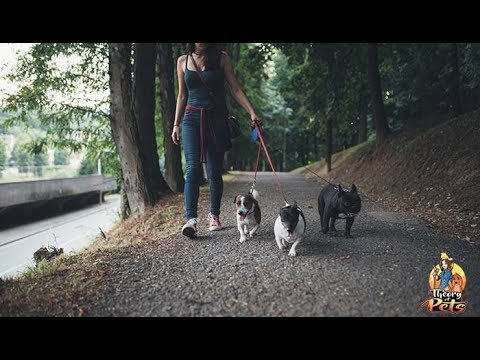 TOP #91: How to Choose the Right Dog Sitter