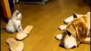 When Kittens Attack funny Cat Fail