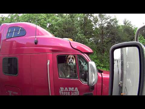 The truck driver and the boxer