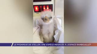 Yvelines | Le Pygargue de Steller, une espèce menacée à l'Espace Rambouillet