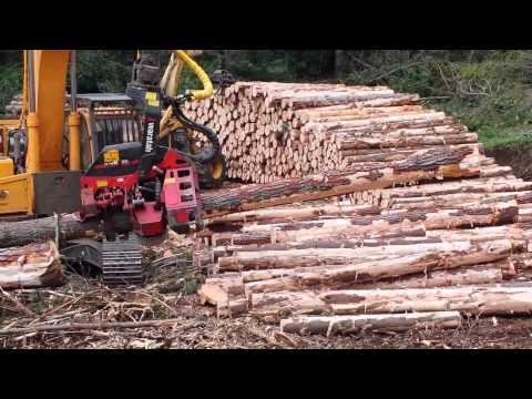 Công nghệ khai thác gỗ công nghệ Châu Âu - Hotline : 0962376188.