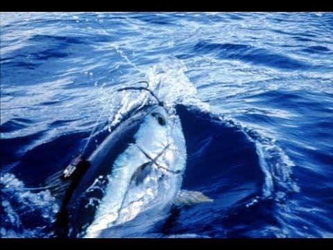 """Pescando patudos """"monjas"""" en el mar Cantábrico - Bigeye tuna fishing in the Cantabrian Sea -"""