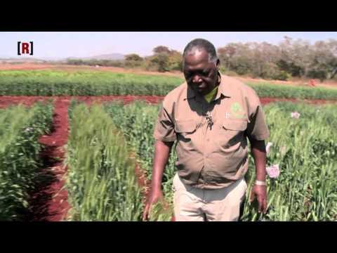 Emission REUSSITE / Canal + Afrique : Seed-Co, le champion des semences hybrides