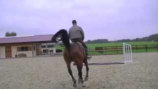 A vendre cheval CSO : Urlando de coquerie 5 ans - www.lesecuriesracle-parmentier.eu