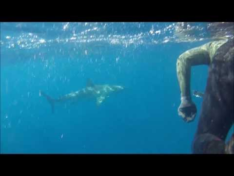 Spearfishing Dirk Hartog Island Shark Bay