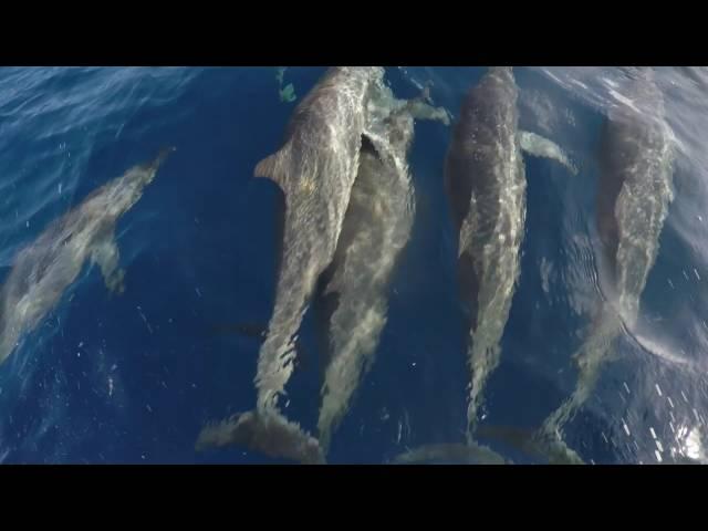 Delfine Curacao