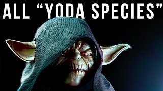 EVERY Member of Yoda Species So Far in Canon & Legends