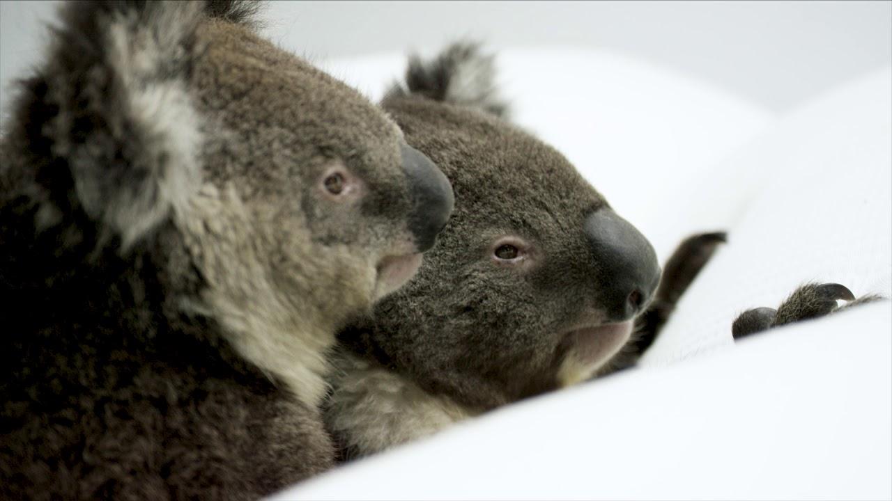 How Good Is Sleep Koala Mattress Youtube