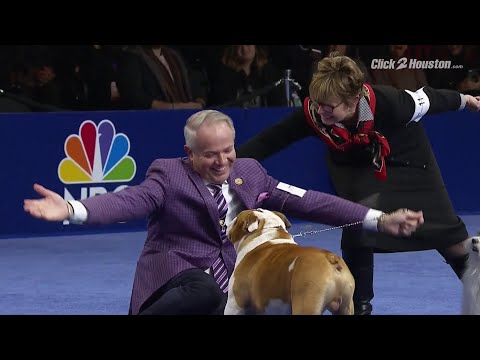 Houston bulldog wins 'Best in Show' at National Dog Show Thursday