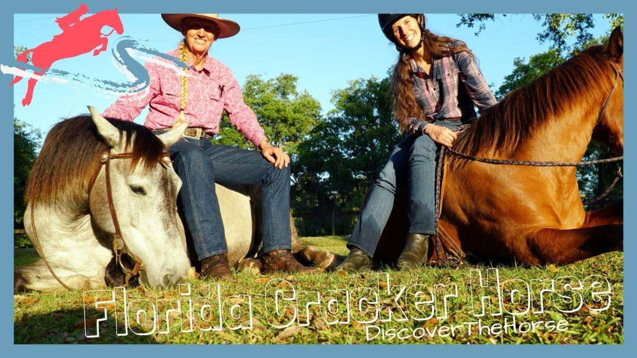 florida cracker horse images