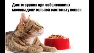 Диетотерапия при заболеваниях мочевыделительной системы у кошек