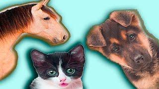 Домашние животные для детей ферма питомцы их детки с Машей из мультика Маша и медведь звуки животных