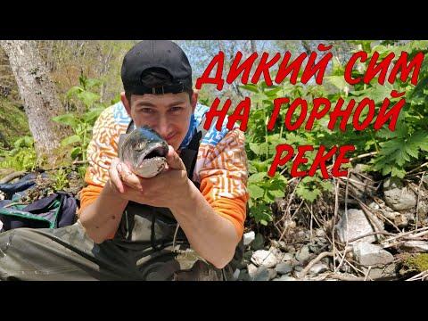 Ловля симы на спининг в горной реке Сахалина. Мальма и одноперый терпуг