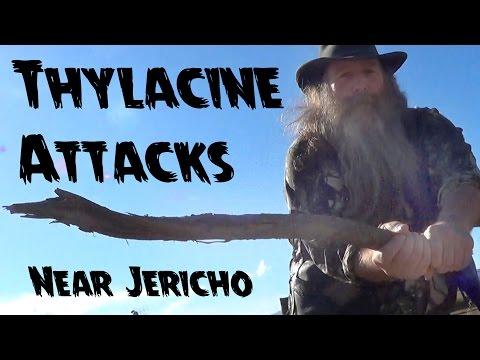 Thyla-Bites E31 Thylacine Attacks near Jericho 1872