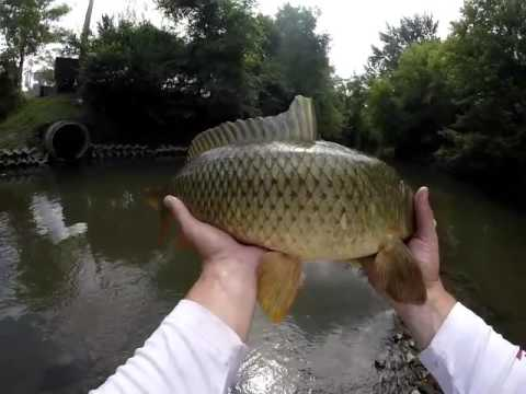 Wading vlog 11 creek fishing common carp using braid for Buy illinois fishing license online